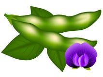 Baccelli, fiore e foglie della soia isolati su fondo bianco royalty illustrazione gratis