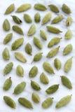Baccelli operati del cardamomo Fotografie Stock Libere da Diritti