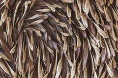 Baccello del baccello Immagini Stock Libere da Diritti
