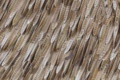 Baccello del baccello Immagini Stock