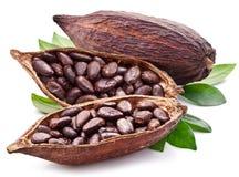 Baccello del cacao Fotografia Stock Libera da Diritti