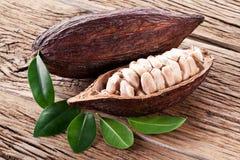 Baccello del cacao Immagini Stock