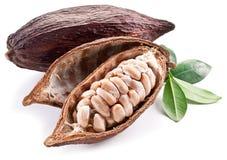 Baccello del cacao Fotografie Stock Libere da Diritti