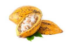 Baccello del cacao su un fondo bianco Fotografia Stock Libera da Diritti