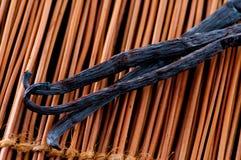 Baccello di vaniglia Immagini Stock