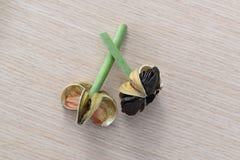Baccello secco del seme da un fiore dell'amarillide Fotografia Stock Libera da Diritti
