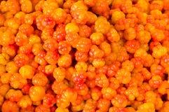 Bacche arancioni Immagini Stock