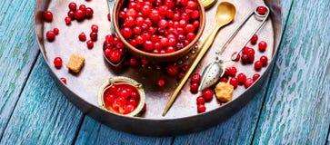 Bacche dei mirtilli rossi per tè immagini stock