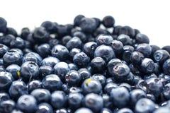 Bacche del mirtillo Concetto organico antiossidante del superfood fotografia stock