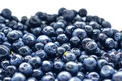 Bacche del mirtillo Concetto organico antiossidante del superfood immagini stock libere da diritti