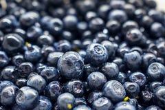 Bacche del mirtillo Concetto organico antiossidante del superfood fotografia stock libera da diritti