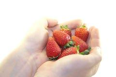 Bacche deliziose fresche Fotografie Stock