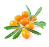 Bacche dell'olivello spinoso isolate sul bianco Fotografie Stock