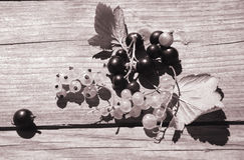 Bacche dell'uva passa e dell'uva spina Immagine Stock Libera da Diritti