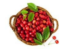Bacche della ciliegia in un canestro su fondo bianco Immagine Stock Libera da Diritti