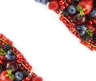 Bacche della miscela su un fondo bianco Bacche e frutti con lo spazio della copia per testo alimento Nero-blu e rosso More mature Fotografia Stock Libera da Diritti