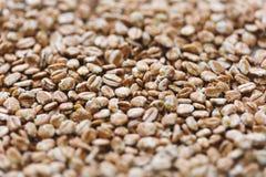 Bacche di grano Fotografie Stock