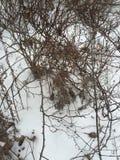 Bacche di inverni Fotografia Stock Libera da Diritti