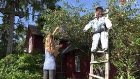 Bacche di raccolto della ragazza della donna del giardiniere dal ciliegio in giardino 4K video d archivio