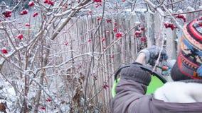 Bacche di raccolto nell'inverno video d archivio