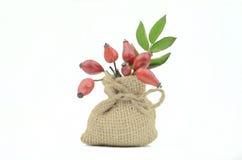 Bacche di rosa selvatiche Immagine Stock