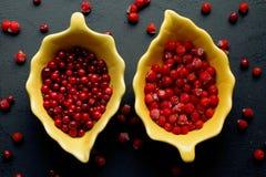 Bacche di rosso di autunno Immagini Stock Libere da Diritti