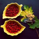 Bacche di rosso di autunno Fotografie Stock
