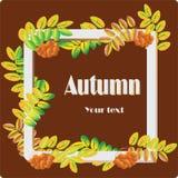 Bacche di sorbo e delle foglie su fondo rosso scuro Composizione in autunno Immagini Stock Libere da Diritti
