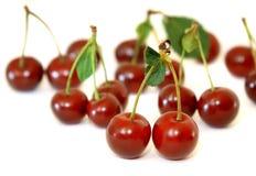 Bacche di una ciliegia Immagini Stock