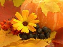 Bacche e fiore di autunno Fotografia Stock Libera da Diritti
