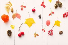 bacche e foglie di autunno su fondo di legno bianco Fotografia Stock Libera da Diritti