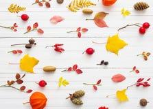 bacche e foglie di autunno su fondo di legno bianco Immagine Stock Libera da Diritti