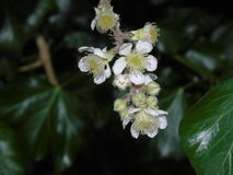 Bacche e foglie di luccichio in parco di Hertfordshire Fotografia Stock Libera da Diritti