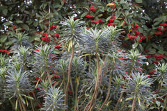 Bacche e piante di inverno Immagini Stock