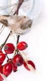 Bacche ed uccello di autunno Fotografie Stock