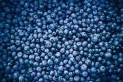 Bacche fresche del mirtillo del mirtillo immagine stock