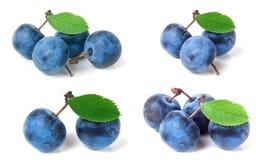 Bacche fresche del prugnolo con le foglie isolate su fondo bianco Insieme o raccolta Immagini Stock Libere da Diritti