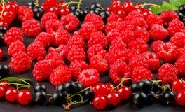 Bacche fresche della ciliegia, dei lamponi, del ribes e del ribes nero Fotografie Stock