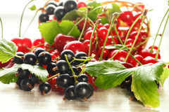 Bacche fresche della ciliegia, del ribes e del ribes nero Fotografia Stock