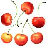 Bacche mature della ciliegia, ciliege, isolate, illustrazione dell'acquerello su bianco Immagini Stock Libere da Diritti