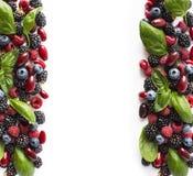 bacche Nero-blu e rosse isolate su bianco More, mirtilli, lamponi, cornioli e foglie maturi del basilico su backg bianco Fotografia Stock Libera da Diritti