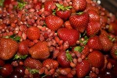 Bacche rosse Fotografie Stock