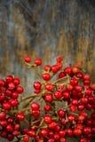 Bacche rosse Fotografie Stock Libere da Diritti