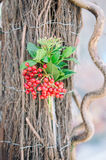 Bacche rosse Fotografia Stock