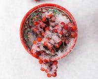 Bacche rosse coperte di neve in tazza modellata luminosa Immagine Stock