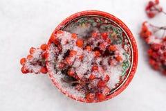 Bacche rosse coperte di neve in tazza modellata luminosa Fotografie Stock