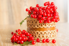 Bacche rosse del Viburnum Fotografie Stock