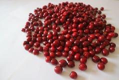 Bacche rosse della ciliegia su un fondo bianco Fotografie Stock Libere da Diritti