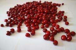 Bacche rosse della ciliegia su un fondo bianco Immagine Stock