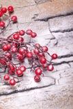 Bacche rosse di inverno con la neve della polvere Immagine Stock Libera da Diritti